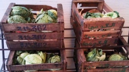 cabbages milano 2