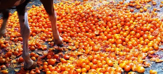 Oranges&Horse2