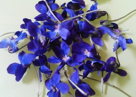 violets close bunch1